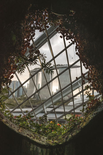 High angle view of trees in greenhouse