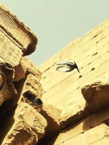 RePicture Travel Kumombo Aswan