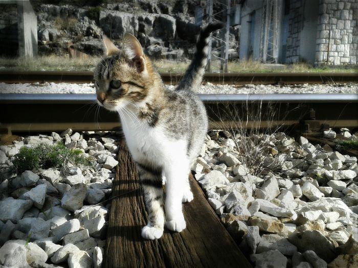Beautiful Cat Pet Photography  Animals