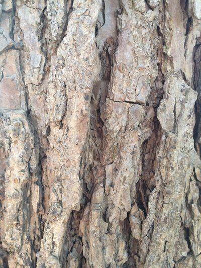 Stones N Rocks or Bark ?