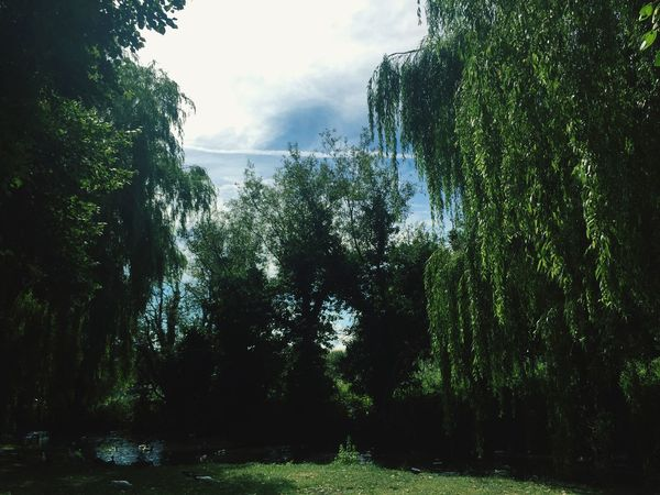 Tree Growth Nature Day Sky Beauty In Nature Tranquil Scene Green Color Grass Water Branch