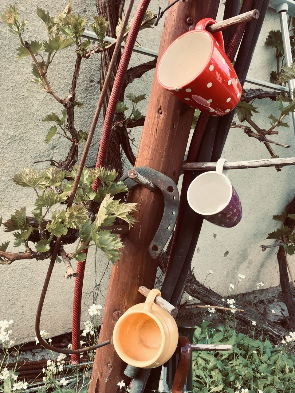 plant, no people, nature, lighting equipment, cup, hanging, drink, growth, mug, tree, food and drink, day, close-up, refreshment, outdoors, household equipment, coffee cup, high angle view, pour spout, crockery, tea cup, electric lamp