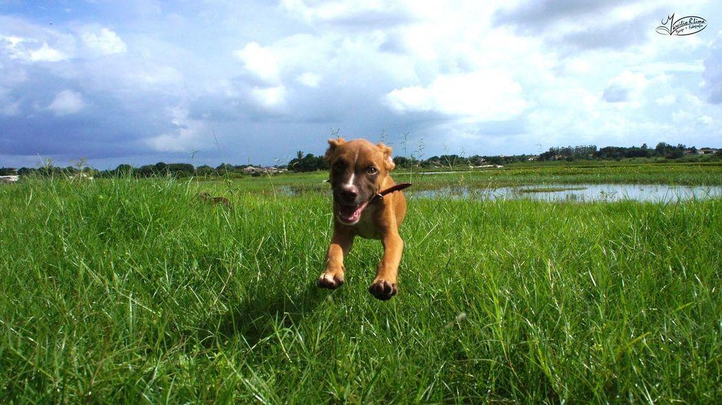 Chico Voador! Cachorro Dog Nature Verde One Animal Colors