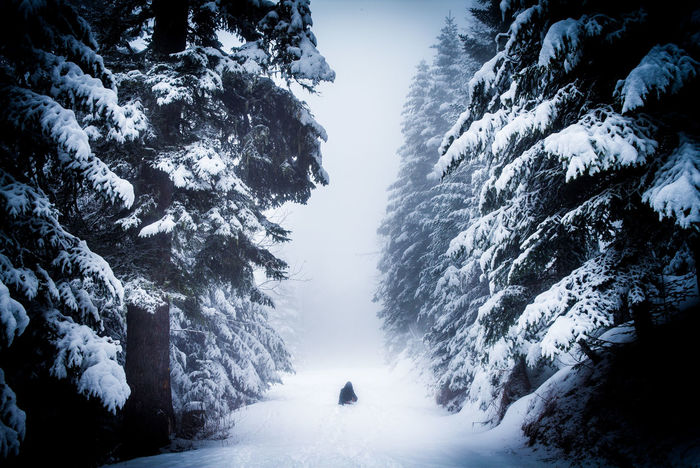 Shining, the beginning! Aftrnoon Allone  Col De Turini Cold Days Cold Temperature Einsam Fear Fog Foggy Forest France Ice Cold Lonely Peace And Quiet Peaceful Quite Reisen Ruhe Shining Snow Sport Travel White Winter Winterlandscape