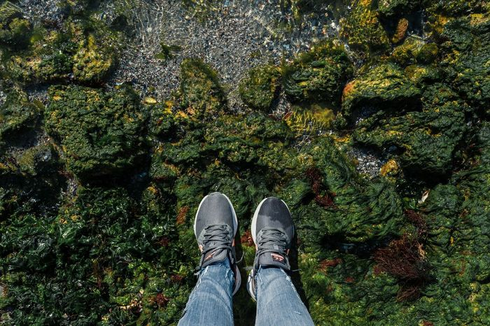 Directly Above People Nature Sea Vegetation Algae Green Sneakers The Week On EyeEm The Colour Of My Mood Lost In The Landscape Summer Exploratorium The Traveler - 2018 EyeEm Awards The Great Outdoors - 2018 EyeEm Awards