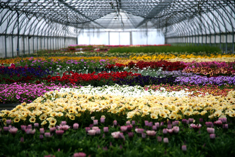 View of flowering plants in greenhouse
