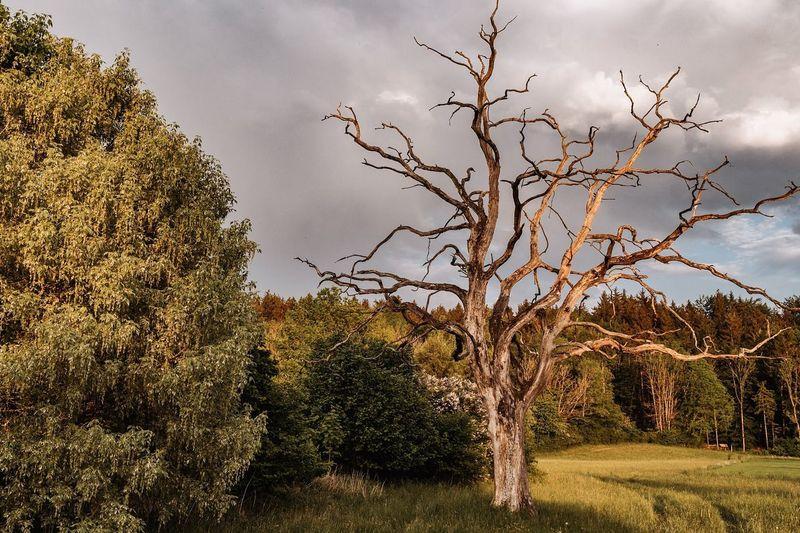 tree Baum Ast