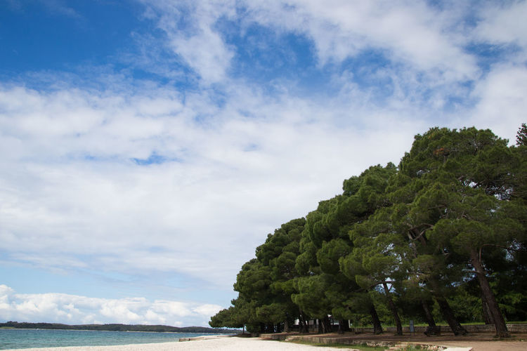 Fluffy trees Italy Vacations Summer Fluffy Blue Sky Blue Sky And Clouds Tree Water Sea Beach Blue Tropical Climate Sky Cloud - Sky Horizon Over Water Landscape Growing Tropical Tree Idyllic Island Archipelago