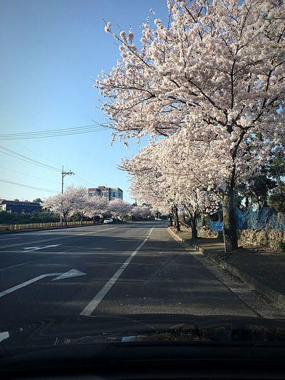 EyeEmNewHere Tree Road Nature Clear Sky