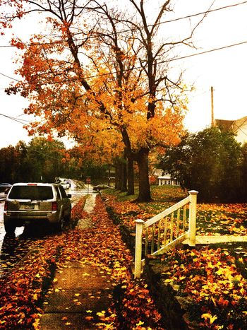 Autumn Rain Leaves IPhoneography