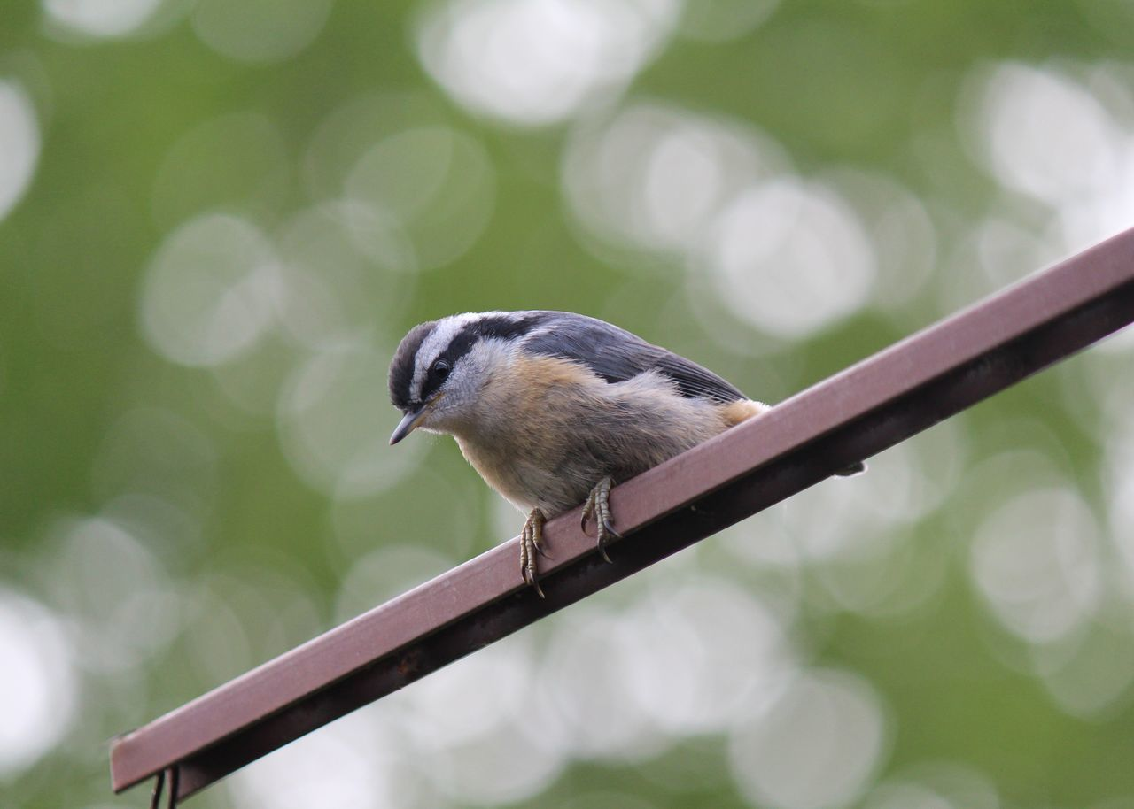 Low Angle View Of Bird Perching On Metal