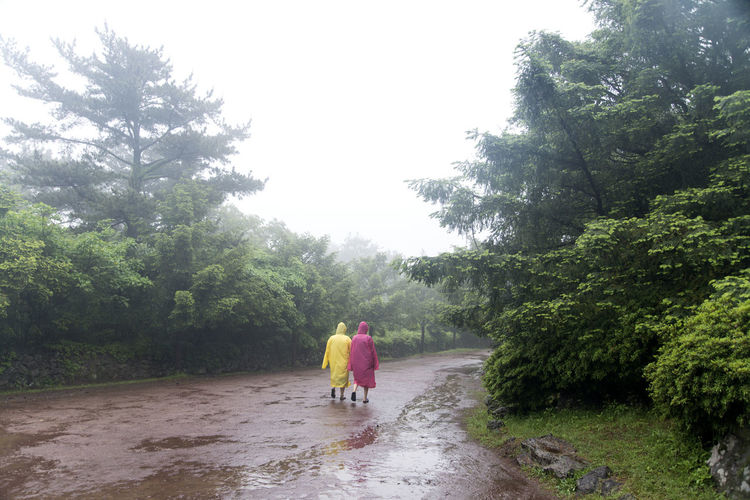 rainy day of Bijarim which is a famous forest in Jeju Island, South Korea Beauty In Nature Bijarim Day Forest Full Length Growth JEJU ISLAND  Nature One Person Outdoors Pathway People Pink Rain Rain Coat Rain Coats Rainy Real People Rear View Sky Tree Walking Yellow
