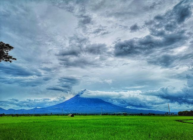 The Mayon Volcano EyeEmNewHere Huaweiphotography Huawei P20 Pro Mayon Volcano Mayon Volcano Daraga, Albay Philippines Perfection Mountain Rural Scene Agriculture Sky Grass Landscape Cloud - Sky Rice Paddy
