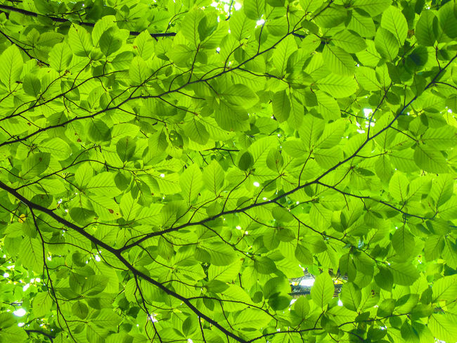 Backgrounds Beauty In Nature Day Green Color Growth Leaf Nature No People Outdoors Photosynthesis Plant