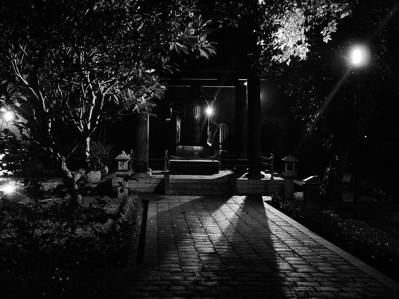night, illuminated, tree, the way forward, outdoors, no people, nature, walkway