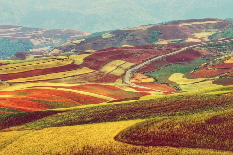 Yunnan China Patchwork Landscape China Landscape_Collection Landscape_photography Multi Colored Mountain Rural Scene Agriculture Landscape Farmland Terraced Field Rice - Cereal Plant Tranquil Scene Cultivated Land Rice Paddy