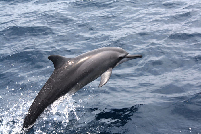 Dolphin Dolphin Watching  Nature Photography Nature_collection Nature's Diversities Pet Portraits