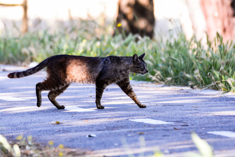The Great Outdoors - 2018 EyeEm Awards The Street Photographer - 2018 EyeEm Awards Animal Animal Themes Black Color Cat Day Domestic Domestic Animals Domestic Cat Feline Full Length Mammal Nature No People One Animal Pets Plant Profile View Selective Focus Side View Sunlight Vertebrate Whisker