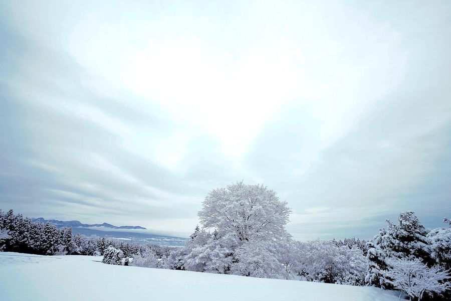 From My Point Of View Getting Inspired Tree And Sky EyeEm Best Shots - Nature Hugging A Tree Showcase: January Winterscapes Trees Winter EyeEm Best Shots - Landscape Snow Day EyeEm Nature Lover EyeEm Best Shots Winter Trees White Taking Photos