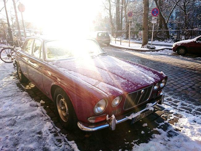 JAGUAR in the morning light Vintage Cars