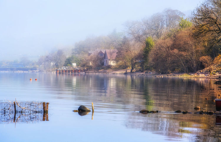 Foggy morning at Loch Ness Lake, Scotland, UK Animal Themes Animal Wildlife Animals In The Wild Architecture Beauty In Nature Bird Day Duck Fog Lake Loch Ness Loch Ness Monster Nature Ness No People Outdoors Reflection Scenics Scotland Sky Swan Tree Uk Water Water Bird