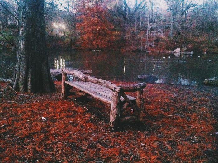Burnt orange. Autumn EyeEm Nature Lover EyeEm Best Shots - Nature NYC Dusk