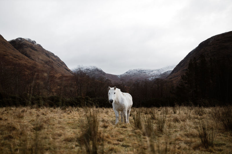Horse standing in a field