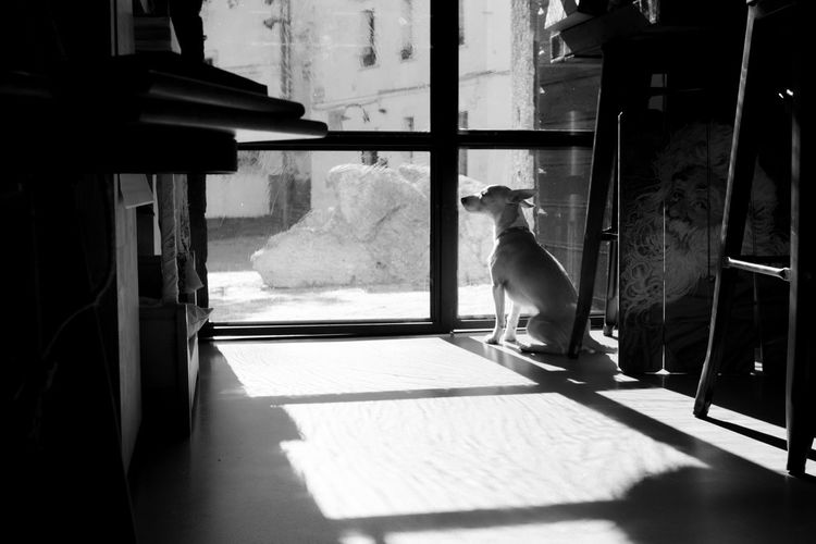Melancholy little dog at the window
