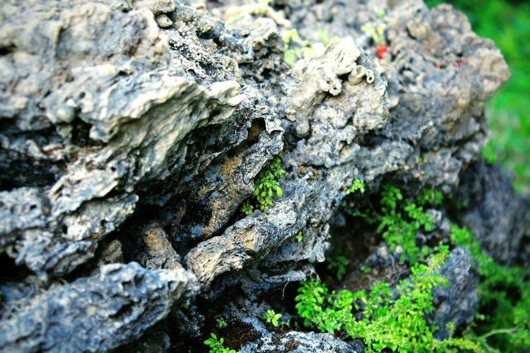 Close-up Nature Textured