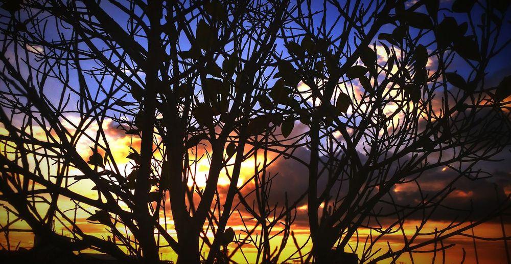 Nature Exploring Trees Sunset