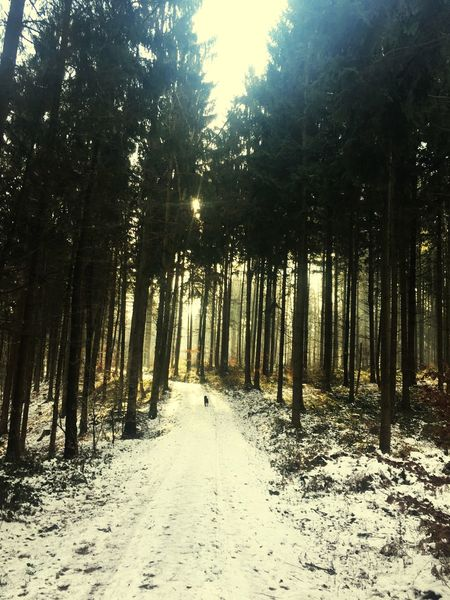 Wood Forest Tranquility Landscape Beauty In Nature Tranquil Scene Day Tree Scenics Sunshine Winter A Walk To Remember Der Rhein Quiet