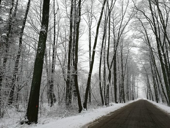 Winter Nature Beauty In Nature Forest Snow Tree Trunk Outdoors Day Cold Temperature No People Sky Landscape Tree Winter Road Road Winter Wintertime Winter Trees Snow ❄ Snowwhite Outdoors Photograpghy
