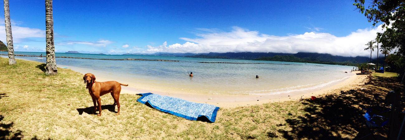Being A Beach Bum Sea Hawaii Eyeemhawaii Roxyvizsla Oahu, Hawaii