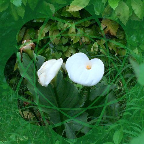 Arômes Arôme Fleurs Fleur Fower Flowers