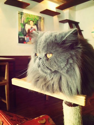 Meow🐱 Cat Cafe