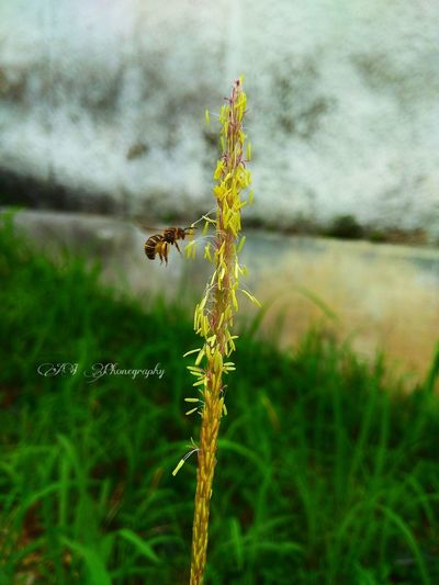 #Nature  #naturephotography #mobilephotograpy  #mobilephonephotography #mobileclick #xiaomiphotograhy #amateurphotography #phonephotography #Phonegraphy #bee #insects