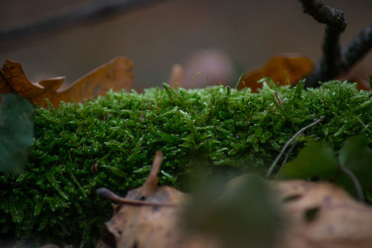 Selective Focus Green Color Plant Food Food And Drink Growth Close-up No People Vegetable Freshness Healthy Eating Nature Day Wellbeing Plant Part Leaf Outdoors Beauty In Nature Agriculture Organic Moss EyeEm Macro Collection discover Berlin