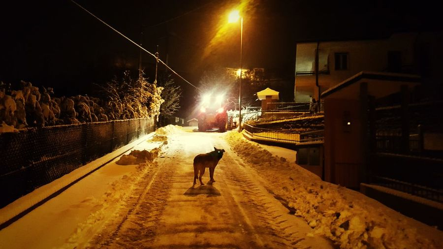 Ehi you! Don't steal my snow! Night Illuminated Rear View Walking Transportation Outdoors Dog Snow Snowing Snow Day ❄ Animal Landscape