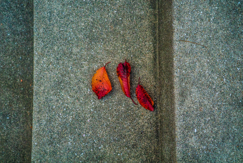 Streetphotography Street EyeEmNewHere Autumn Mood Red No People Day Directly Above Close-up Leaf Plant Part Autumn Change Outdoors Textured  Nature Dry High Angle View Fragility Vulnerability  Wall - Building Feature Falling Single Object Maple Leaf Concrete Leaves Natural Condition