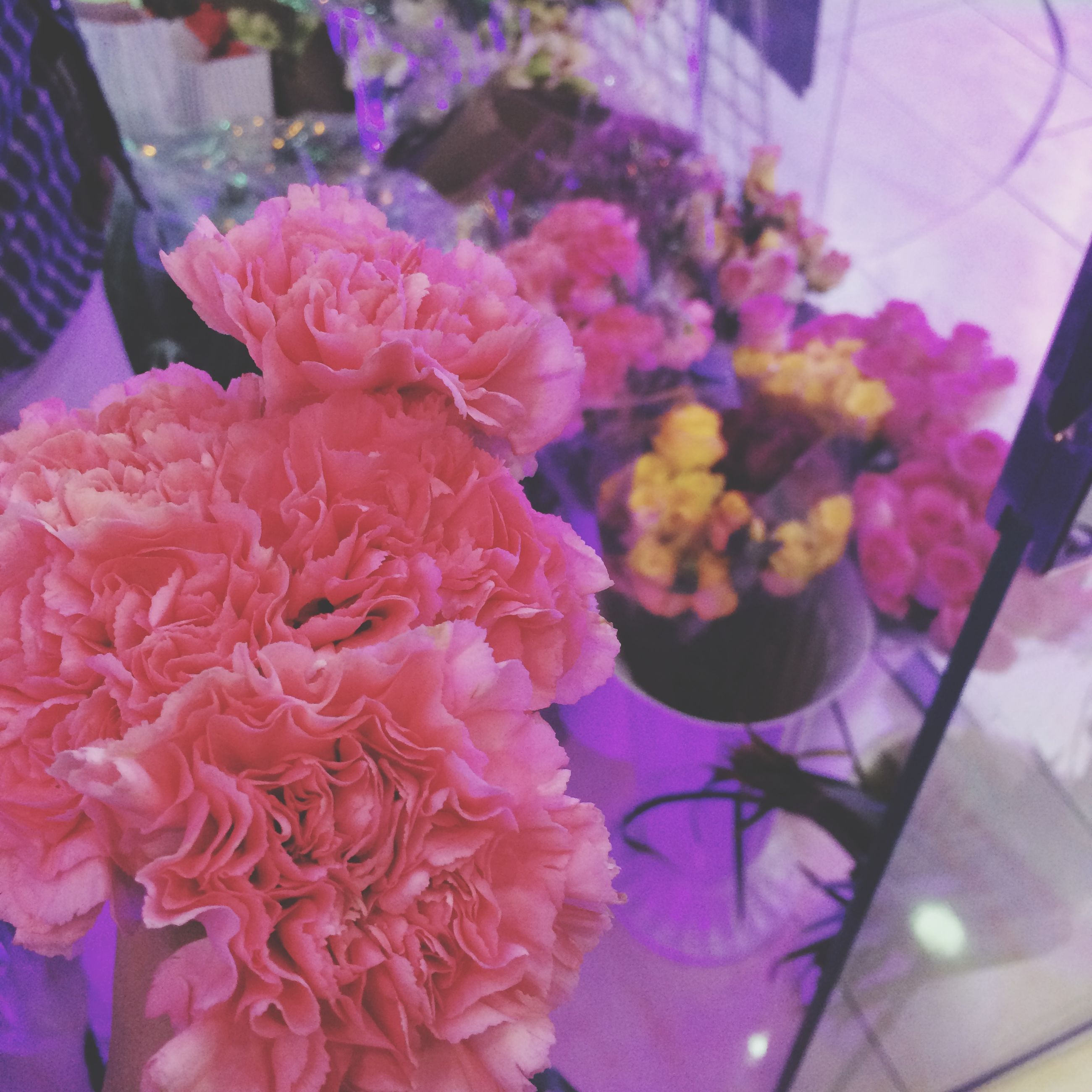 flower, freshness, indoors, petal, fragility, flower head, pink color, close-up, high angle view, bunch of flowers, beauty in nature, decoration, multi colored, bouquet, variation, growth, no people, nature, vase, plant