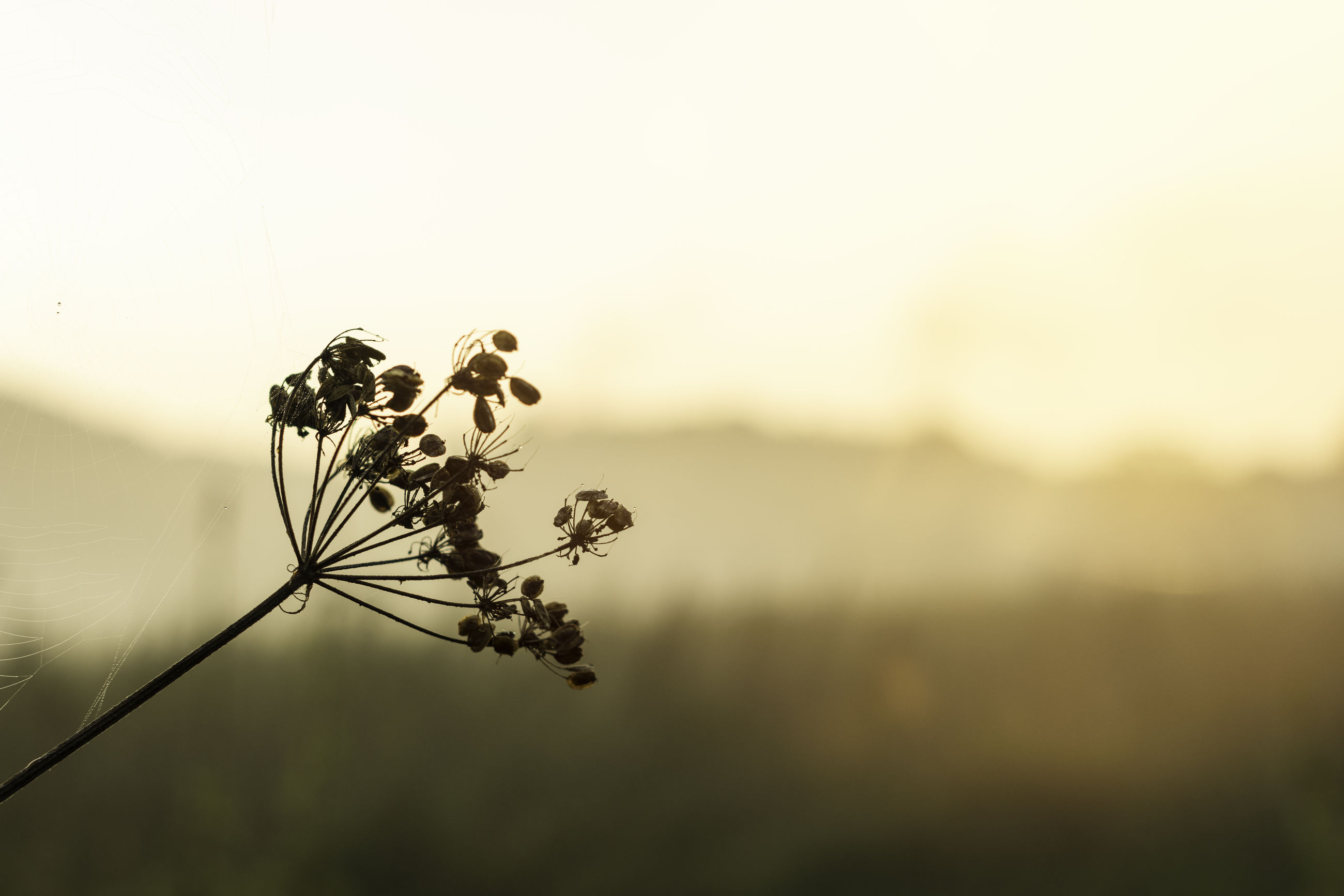 nature, no people, plant, close-up, beauty in nature, flower, fragility, outdoors, day, sky