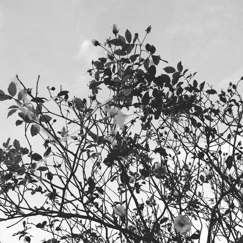 Bestoftheday Flowers,Plants & Garden Spiderweb Timesgoingbyfast