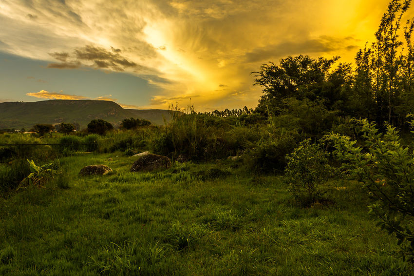 Jungle Sunset Angola Travel Vacations Africa Beauty In Nature Cloud - Sky Day Destination Field Grass Huila  Landscape Lubango Nature No People Outdoors Scenics Sky Summer Sunset Tourism Tranquil Scene Tranquility Tree