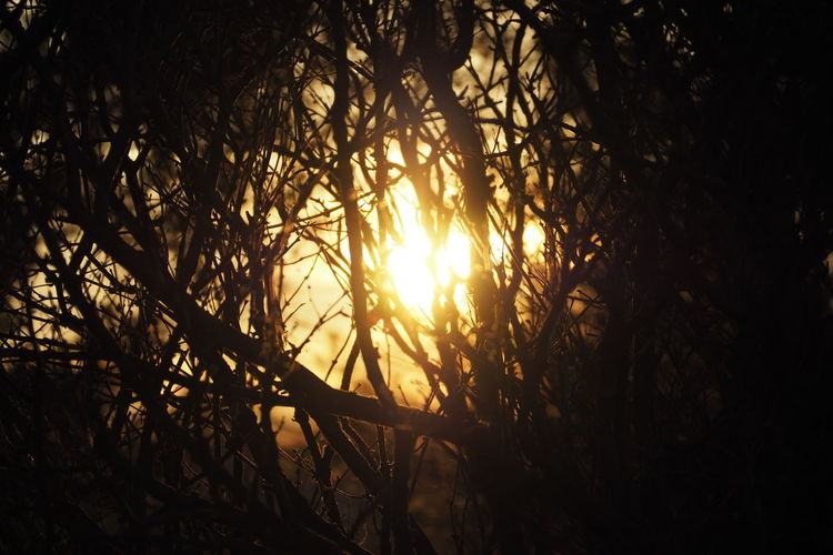 Tree Tree Area Sunset Dawn Beauty Rural Scene Branch Sunlight Silhouette Streaming Woods Shining Tree Trunk Sunbeam