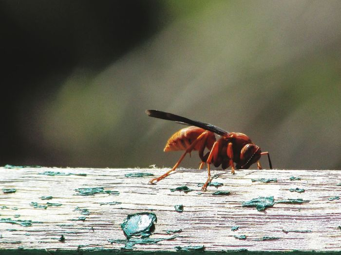 Close-up of insect perching on wood