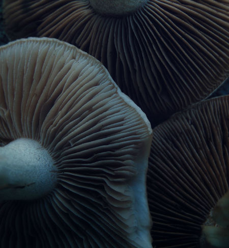 ....there's not mushroom for interpretation here.... Abstract Extreme Close-up EyeEm Nature Lover Food Fragility Geometric Abstraction Gills Color Palette Lamellae Mushrooms Muted Tones Nature Organic Shrooms Softness
