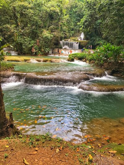 Wanderlust Travel Ysfalls Jamaica Water Plant Nature No People Day Tree Beauty In Nature
