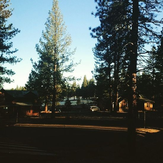 Waking up in the woods 🌲🍂 Lake Tahoe Truckee  Holiday Sun Morning Tooearlytowakeup Aupair Life Oldgreenwood Wannastayhere Forever 🎿
