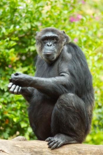 Portrait of gorilla sitting on plant