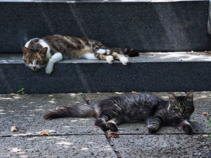 Happy Sunday🐈🐈 Simple Quiet Love 猫 Japan M.ZUIKO DIGITAL OM-D E-M5 MarkⅡ Olympus EyeEm Best Shots No People Streetphotography Group Of Animals Outdoors Day Stray Cat Animal Themes Relaxing Cats Cat Animal Themes Animal Domestic Cat
